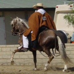 APACHE_UNDER_SADDLE_239x240